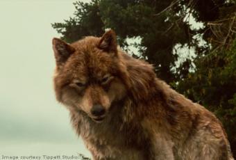 фото волков оборотней